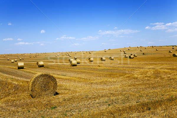 Saman alan tarım hasat yaz gökyüzü Stok fotoğraf © avq