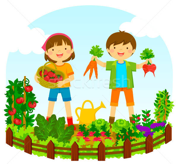 kids in a vegetable garden Stock photo © ayelet_keshet
