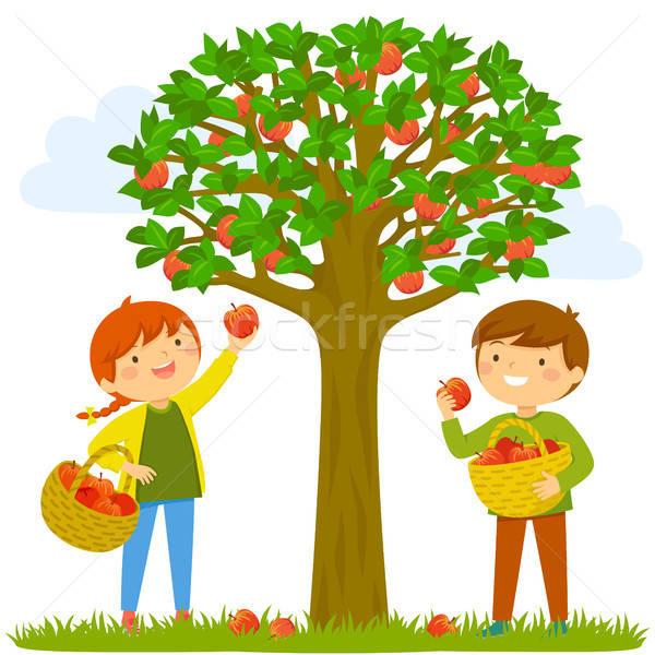 Children picking apples Stock photo © ayelet_keshet