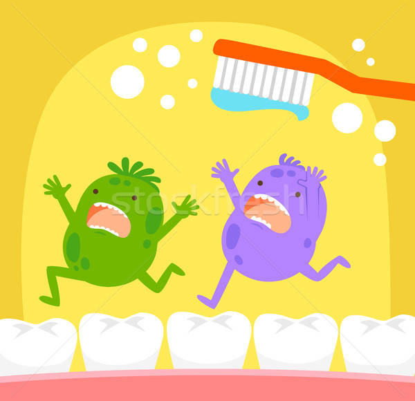 tooth germs and toothbrush Stock photo © ayelet_keshet