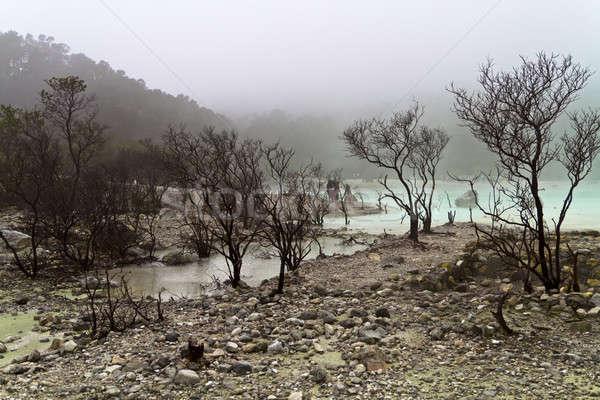 Dode grond krater bomen rand Stockfoto © azamshah72