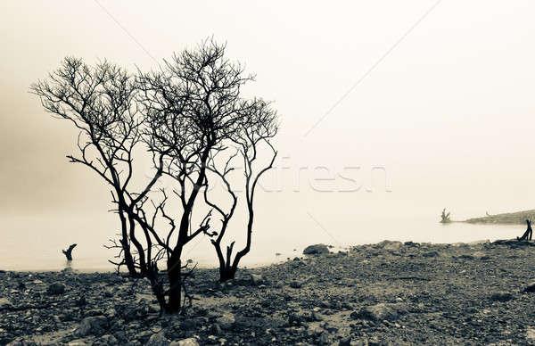 湖 枯れ木 死んだ 木 エッジ ストックフォト © azamshah72