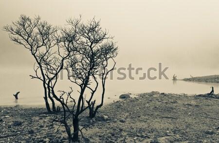 деревья зеленый озеро мертвых край вулканический Сток-фото © azamshah72