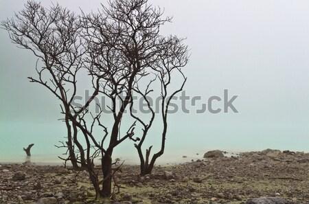 Trees and Green Lake Stock photo © azamshah72