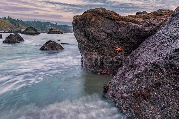 Shoreline Beach Scene from Northern California Stock photo © Backyard-Photography