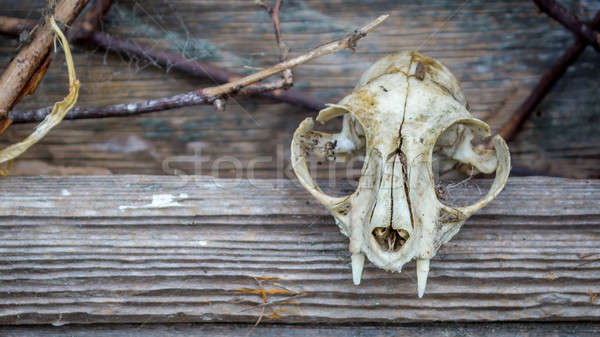 Hayvan kafatası pencere eski ahır gökyüzü Stok fotoğraf © Backyard-Photography