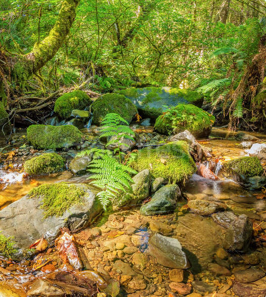 A Small Stream in the Mountains of California Stock photo © Backyard-Photography