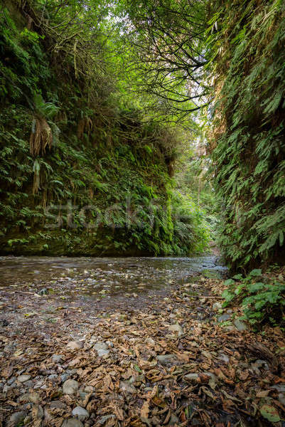 Varen canyon Californië natuur foto Stockfoto © Backyard-Photography