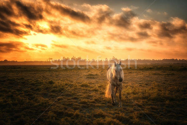 Horse in a Pasture with Orange Sunset Stock photo © Backyard-Photography
