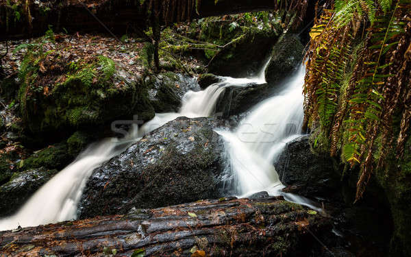 Klein waterval regenwoud bos landschap Stockfoto © Backyard-Photography