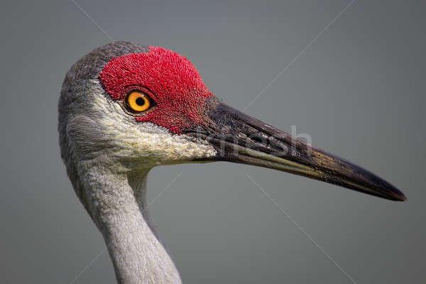Kuş vinç gün Florida ABD Stok fotoğraf © Backyard-Photography