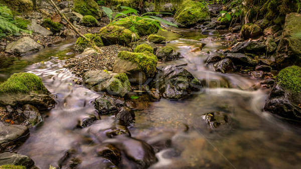 Gentle Creek in a Forest Stock photo © Backyard-Photography