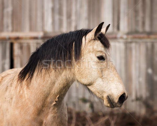 Ló portré csőr barátságos külső tavasz Stock fotó © Backyard-Photography