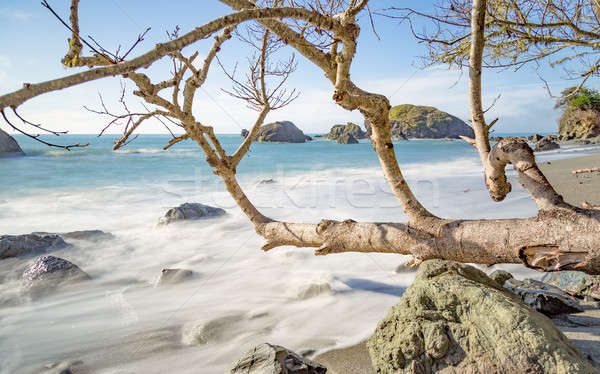Praia paisagem primavera mar oceano Foto stock © Backyard-Photography
