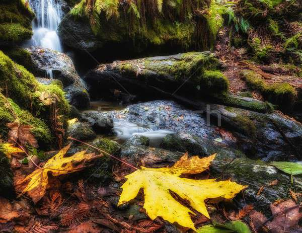 Rustig waterval najaar klein bergen Californië Stockfoto © Backyard-Photography