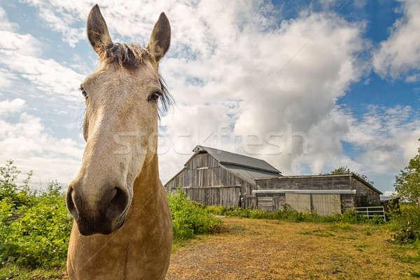 Barátságos ló csőr színes kép erdő háttér Stock fotó © Backyard-Photography