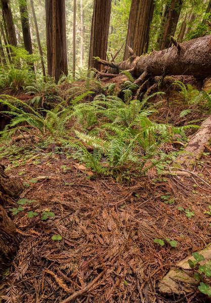 Bos noordelijk natuur bomen groene Stockfoto © Backyard-Photography