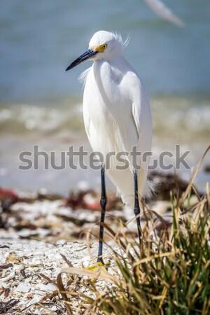 Florida plaj renkli görüntü su arka plan park Stok fotoğraf © Backyard-Photography
