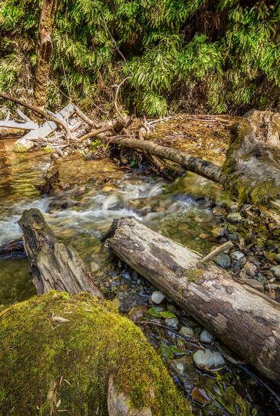 Fern Canyon in Humboldt County, California Stock photo © Backyard-Photography