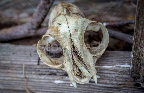 животного череп окна старые сарай небе Сток-фото © Backyard-Photography