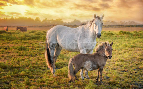 Paarden oranje zonsondergang noordelijk usa Stockfoto © Backyard-Photography