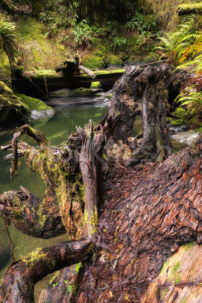 Beautiful Creek in a Northern California Forest Stock photo © Backyard-Photography