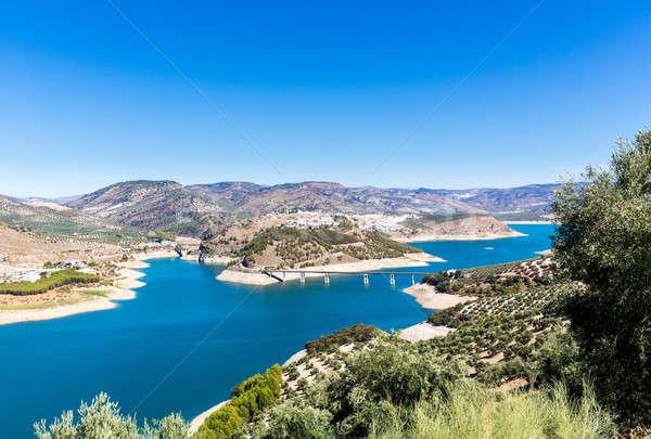 Olive trees around Lake Iznajar in Andalucia Stock photo © backyardproductions