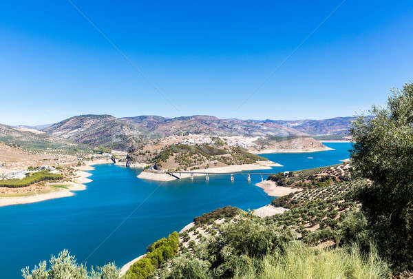 Stock photo: Olive trees around Lake Iznajar in Andalucia
