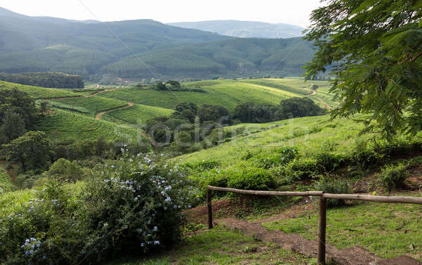 South Africa countryside in Komatiland Forest Stock photo © backyardproductions