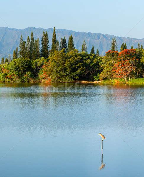 Bird perching on sign in calm lake by Na Pali Stock photo © backyardproductions