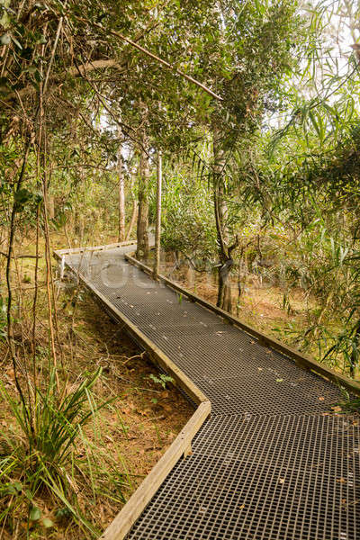 Raised walkway through forest in NSW Stock photo © backyardproductions