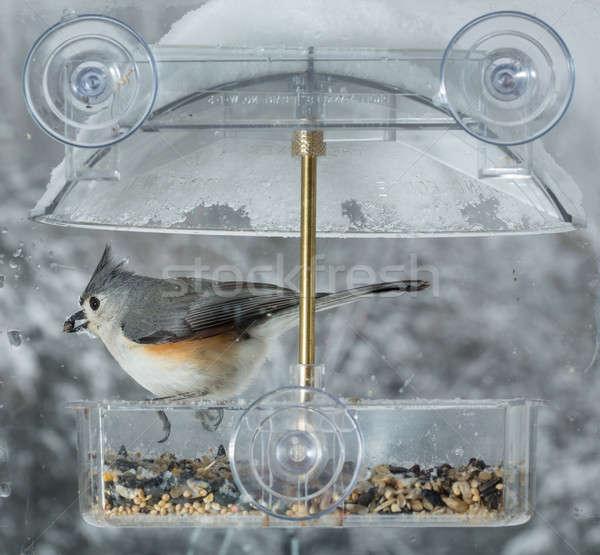 Janela pássaro anexada molhado frio dia Foto stock © backyardproductions