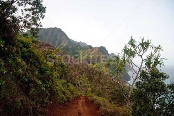 View of Na Pali coast Stock photo © backyardproductions