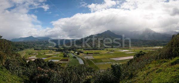 Panorama of Hanalei Valley on Kauai Stock photo © backyardproductions
