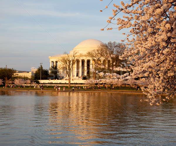 Jefferson Memorial behind cherry blossom Stock photo © backyardproductions
