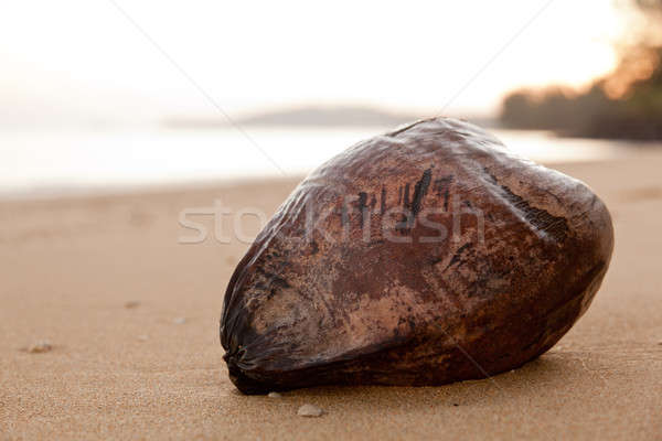 Stock photo: Close up coconut on beach at dawn