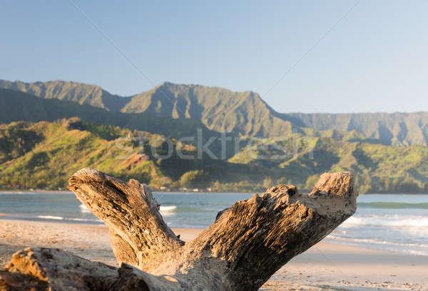 Wyspa plaży starych driftwood widoku drzewo Zdjęcia stock © backyardproductions