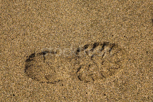 Single right shoe print in sand Stock photo © backyardproductions