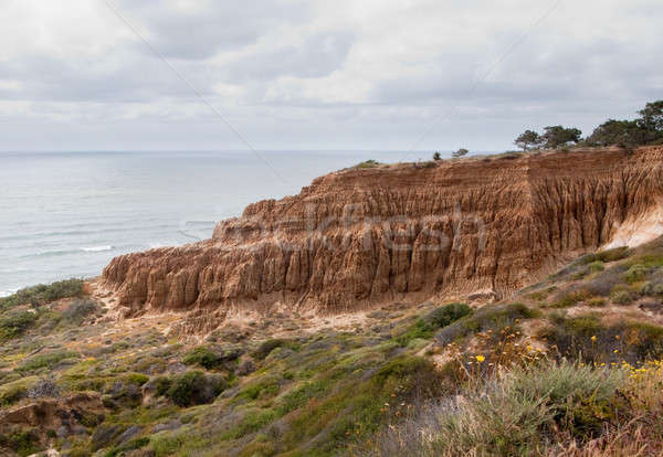 Cliffs off Torrey Pines state park Stock photo © backyardproductions