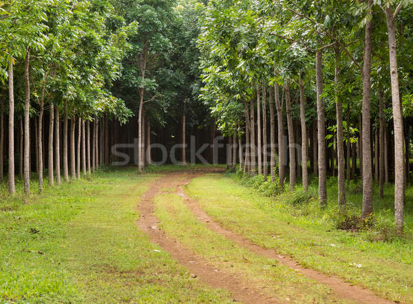Acajou plantation Hawaii suivre arbres Photo stock © backyardproductions