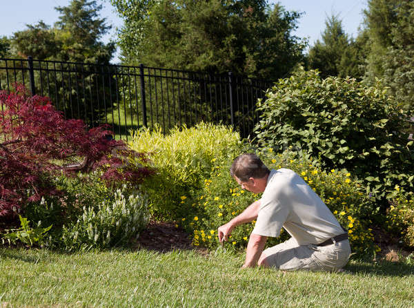 Senior man digging in garden Stock photo © backyardproductions