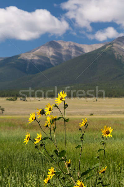 Farmyard and flowers by Mt Princeton CO Stock photo © backyardproductions