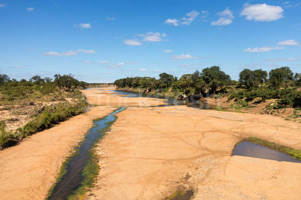 Dry river bed in Kruger National Park Stock photo © backyardproductions