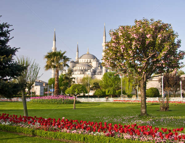 Blue mosque in Istanbul Stock photo © backyardproductions