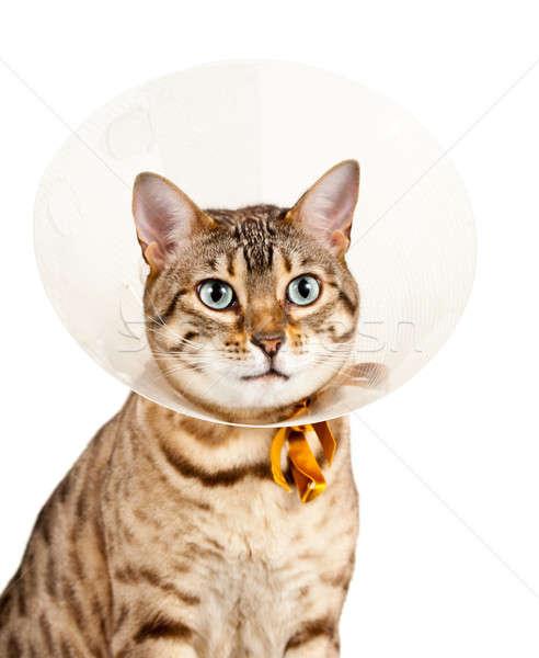 Сток-фото: котенка · шее · кошки · глядя · печально