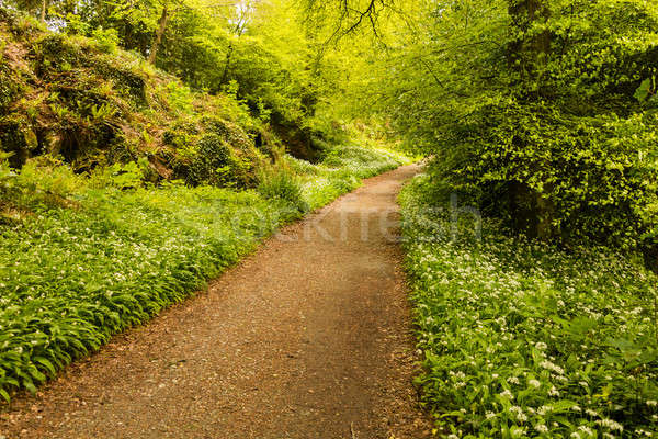 Hiking trail going into bright woods Stock photo © backyardproductions