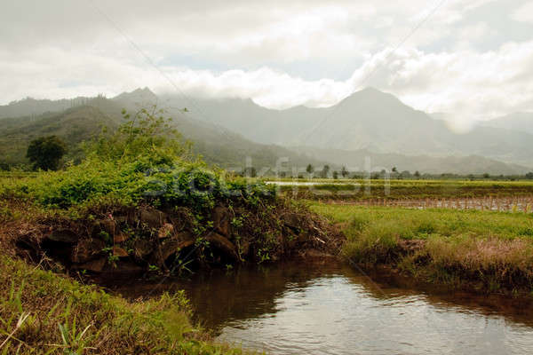 Small bridge over irrigation ditch in Hanalei valley Stock photo © backyardproductions