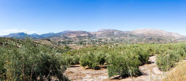 オリーブ 木 地平線 アンダルシア 遠く ストックフォト © backyardproductions