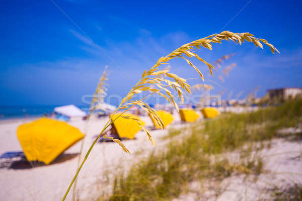 Madiera Beach and sea oats in Florida Stock photo © backyardproductions