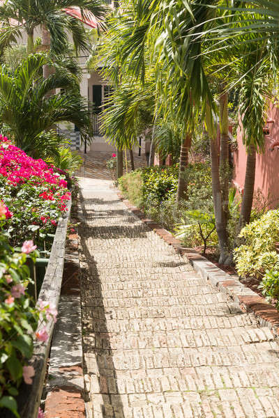 Famous 99 steps Charlotte Amalie Stock photo © backyardproductions